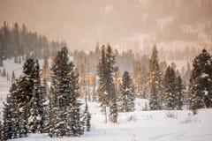 Forêt de montagne Image stock