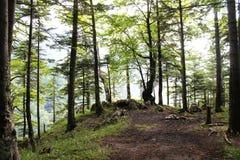 Forêt de montagne Image libre de droits