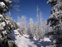 Forêt de montagne Photos libres de droits