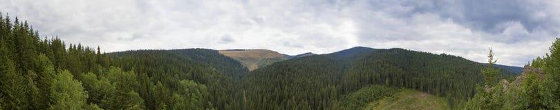 Forêt de montagne images stock