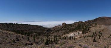 Forêt de montagne au-dessus des nuages - Ténérife Photo libre de droits