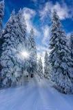Forêt de montagne de cuvette de chemin un jour ensoleillé d'hiver image libre de droits