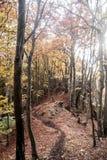 Forêt de montagne d'automne avec les arbres colorés, le sentier de randonnée, les petites roches et les feuilles tombées Images stock