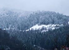 Forêt de montagne d'hiver Images libres de droits