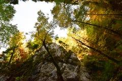Forêt de montagne dans la saison d'automne Image stock