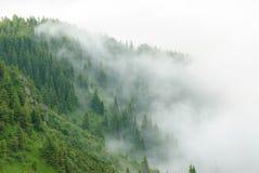 Forêt de montagne dans le brouillard après un orage Ukrainien Carpathiens Photographie stock libre de droits