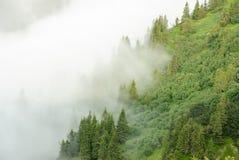 Forêt de montagne dans le brouillard après un orage Ukrainien Carpathiens Photographie stock