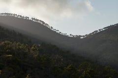 Forêt de Monterosso Photographie stock