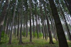 Forêt de Mountin en août Photos stock