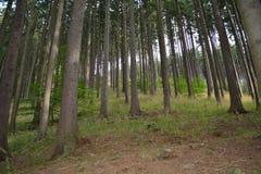 Forêt de Mountin en août Images stock
