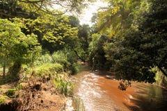Forêt de Muddy River Running Through Tropical images libres de droits