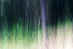 Forêt de mystère Image stock