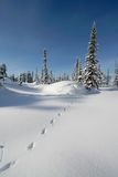 Forêt de neige Photographie stock libre de droits