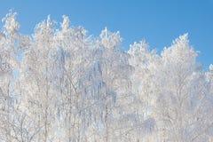 Forêt de neige Images libres de droits
