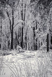 Forêt de neige Photos stock