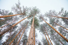 Forêt de neige et ciel nuageux Photographie stock
