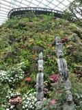Forêt de nuage Image stock