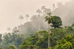 Forêt de nuage Photographie stock
