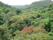 Forêt de nuage de Monteverde Photos libres de droits