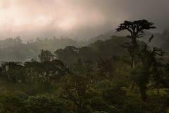 Forêt de nuage du Costa Rica image libre de droits