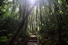 Forêt de nuage de Monteverde images libres de droits