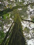 Forêt de nuage, parc national de Doi Inthanon, Chiang Mai images stock