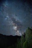 Forêt de nuit Photographie stock