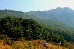 Forêt de périphéries ooty Photo stock