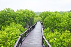Forêt de palétuvier avec du bois Photographie stock