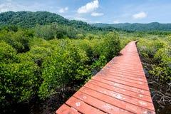 Forêt de palétuvier avec la manière en bois de promenade Photos stock