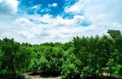 Forêt de palétuvier et beaux ciel bleu et cumulus Aménagez la forêt en parc verte d'arbre avec le ciel bleu et les nuages blancs  photos libres de droits