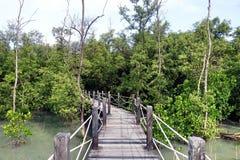 Forêt de palétuvier, Thaïlande Photographie stock libre de droits