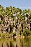 Forêt de palmier images libres de droits