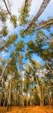 Forêt de panorama Image libre de droits