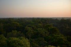 Forêt de Pantanal à l'aube Image stock