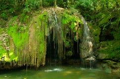 Forêt de Pantanl dans le bonito Image libre de droits