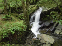 Forêt de paradis Photo stock