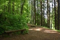 Forêt de parc Photographie stock libre de droits