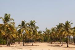 Forêt de paume Image libre de droits