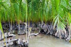 Forêt de paume de Nipa images stock