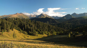 Forêt de paysage en montagnes Image libre de droits