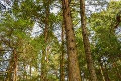 Forêt de peuplement vieux Image stock