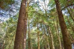 Forêt de peuplement vieux Photos stock