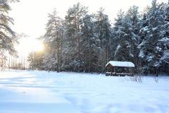 Forêt de pin après une tempête de chute de neige importante le jour ensoleillé d'hiver Photographie stock libre de droits