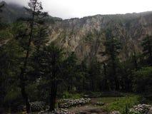 Forêt de pin avant une falaise de l'Himalaya Images stock
