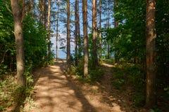 Forêt de pin avec un chemin vers la rivière photo stock