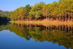 Forêt de pin chez Pang Ung, Mea Hong Son Province, Thaïlande photos libres de droits