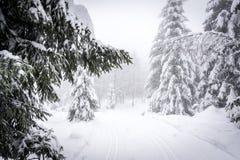 Forêt de pin d'hiver Image libre de droits