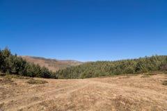 Forêt de pin dans la montagne et le ciel bleu d'espace libre Photographie stock libre de droits