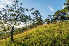 Forêt de pin dans le Lat du DA Photo libre de droits
